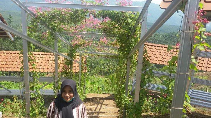 Cerita Legenda di Balik Suburnya Bunga Air Mata Pengantin di Kampung Madu Banjaranyar Ciamis