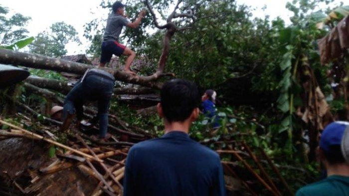 Hujan Deras Disertai Angin Kencang, Rumah Warga Tertimpa Pohon, Begini Nasib Penghuninya