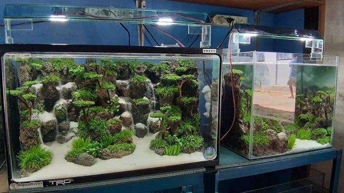 Membuat Hiasan Akuarium Berawal Coba-coba, Hendi Pernah Dapat Pesanan dari Jerman - akuarium-bikinan-hendi-andriana.jpg