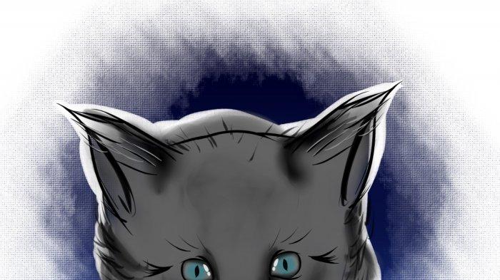 Anak Kucing Kelimis Menggigil Kedinginan