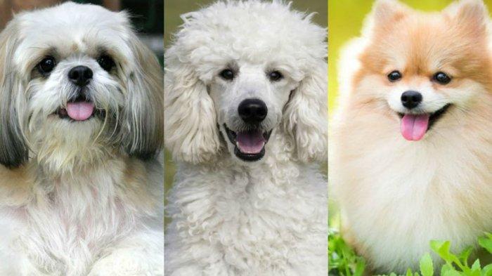 Ini Lho Ras Ras Anjing Yang Menggerogoti Jasad Tuannya Di Depok Ternyata Bukan Jenis Anjing Buas Tribun Jabar