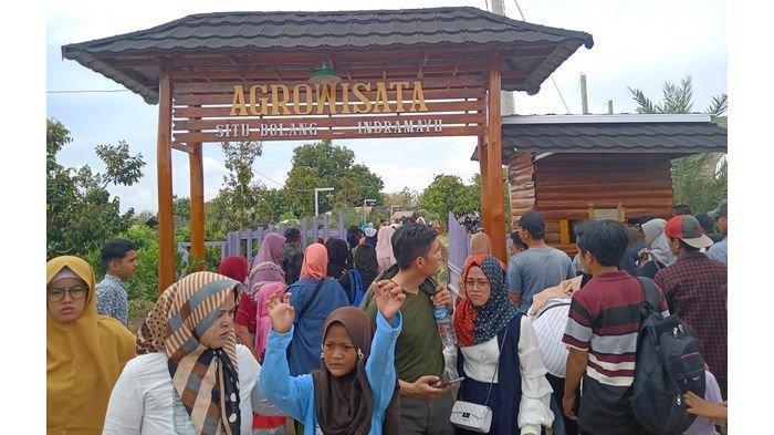 Argowisata Situ Bolang Indramayu Jadi Viral, Ada Ribuan Pohon Mangga Pengunjung Bisa Petik Langsung