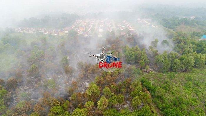 4 Orang Tewas hingga Ular Piton Terjebak Api, Akibat Kebakaran Lahan dan Hutan di Kalimantan Barat