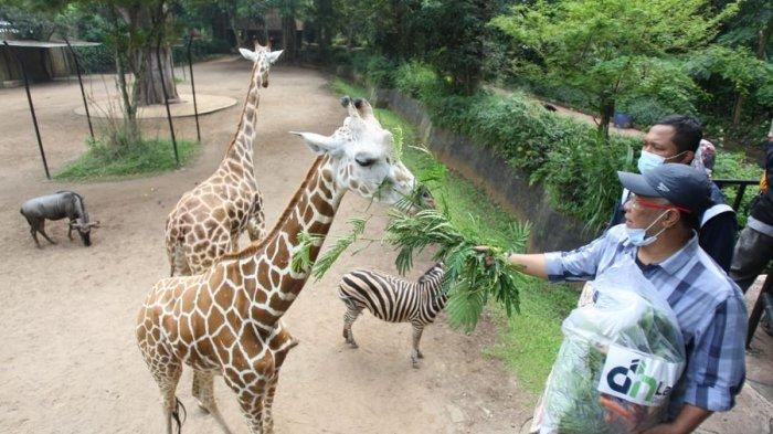 Bantuan yang didapatkan Bandung Zoological Garden (Bazoga) alias Kebun Binatang Bandung dari komunitas pecinta satwa di Kota Bandung