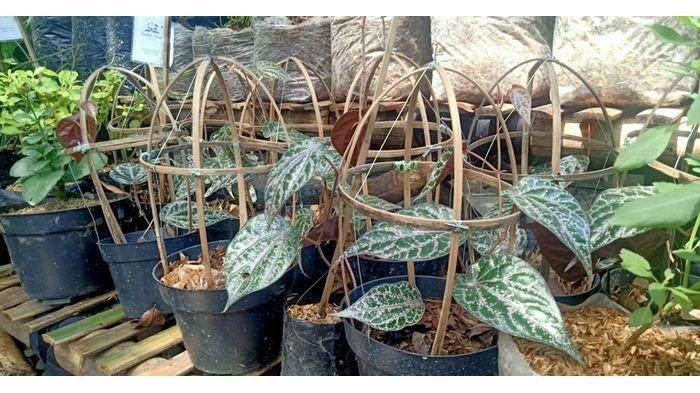 Berbagai tanaman herbal yang ada di herbal house