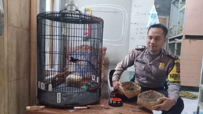Anggota Polres Purwakarta Ini Piawai Budidaya Burung Murai Batu, yang Pesan Harus Inden
