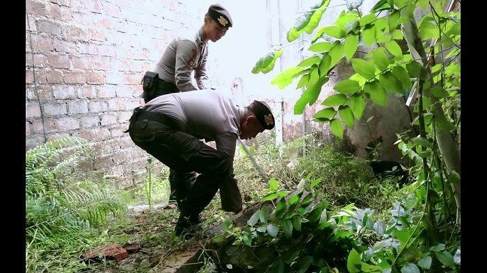 Pawang Ular dari Sabhara Polres Tasikmalaya Turun Tangan Buru Ular Kobra di Perumahan Tata Lestari