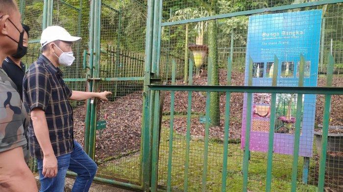 Bunga Bangkai The Giant Titans Mekar di Kebun Raya Cibodas, Fenomena Langka 4 Tahun Sekali