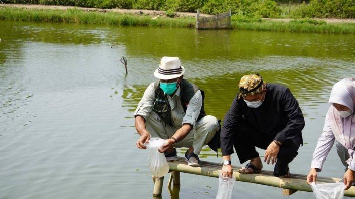 Petambak Udang di Subang Dapat Bantuan Jutaan Benur dari Pemprov Jabar