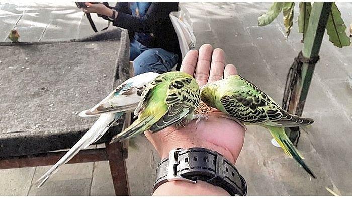 Serunya Mengamati Dan Mengenal Beragam Jenis Burung Paruh Bengkok Di Taman Beta Aviary Pvj Tribun Jabar