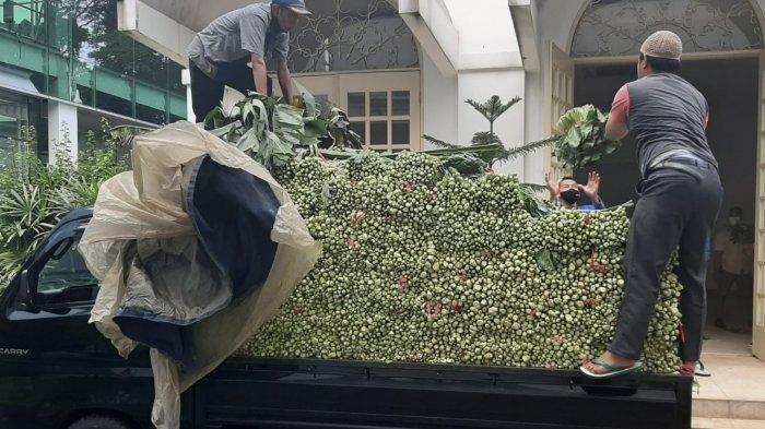 Harga Anjlok, Presiden Jokowi Beli Sayuran Sawi 2 Ton, Petani di Sukabumi; Alhamdulilah Diborong