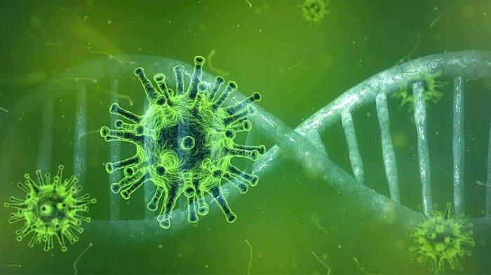 Gejala Awal Terserang Virus Corona, dari Sini Sumber Penularan Virusnya