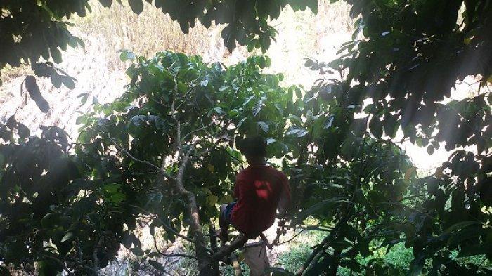 Cuaca Ekstrem Bikin Panen Duku di Ciamis Anjlok hingga 50 Persen, Harganya Pun Menurun b