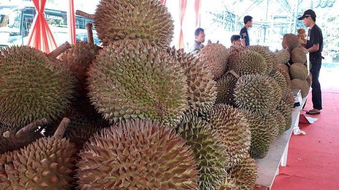 Kurang dari Satu Jam 300 Ribu Durian Musang King Dibeli Warga Cina, Nilai Transaksi Rp 221 Miliar