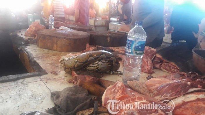 Di Kota Ini Daging Ular Piton, Kelelawar, Tikus, Babi, Laris Manis, Besok Acara Pengucapan Syukur