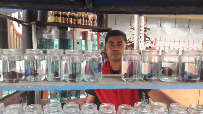 Kisah Dede, Hidupi Keluarga dari Berjualan Ikan Cupang Hasil Ternak Sendiri