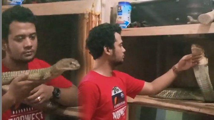Panji Petualang Sampai Kaget, Ular King Cobra Raksasa Itu Menyerangnya Membabi Buta
