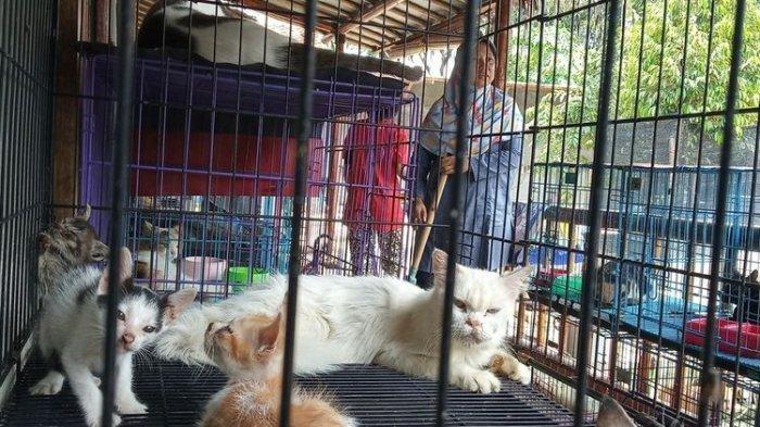 Dita dan Suaminya Keluarkan Rp 1 Juta Sehari Demi Rawat 250 Kucing Terlantar
