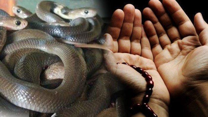 Marak Serangan Ular, Inilah Doa-doa Rasulullah agar Terhindar dari Gangguan Binatang Buas