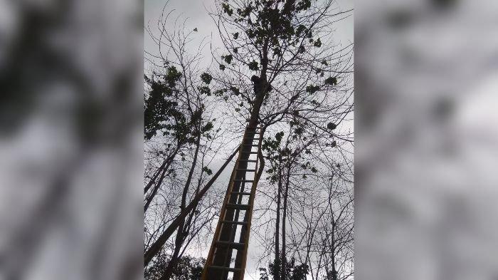 Dikejar Anjing, Kucing Lucu Ini Naik ke Atas Pohon Setinggi 20 Meter, Pemilik Minta Tolong Damkar