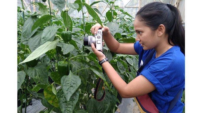 Manfaat Sering Konsumsi Paprika, Rasanya Enak, Bonusnya Bisa Mencegah Tubuh dari Penyakit Mematikan