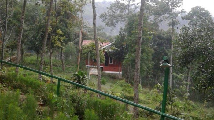 Getaran Gempa Banten Sampai ke Situs Gunung Padang Cianjur, Sebuah Saung Goyang Kena Lindu