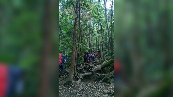 Pendaki Padati Gunung Gede Hari Ini, Harus Antre di Jalur Pendakian