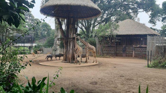 Besok PPKM Berakhir, Kebun Binatang Bandung Berharap Ada Kabar Gembira dan Bisa Segera Buka