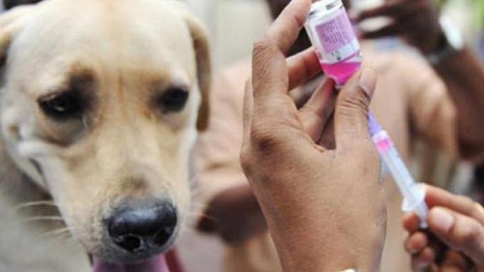 Bocah 7 Tahun Tewas dengan Gejala Rabies, Anjing yang Menggigit Sudah Dimakan Keluarga Korban