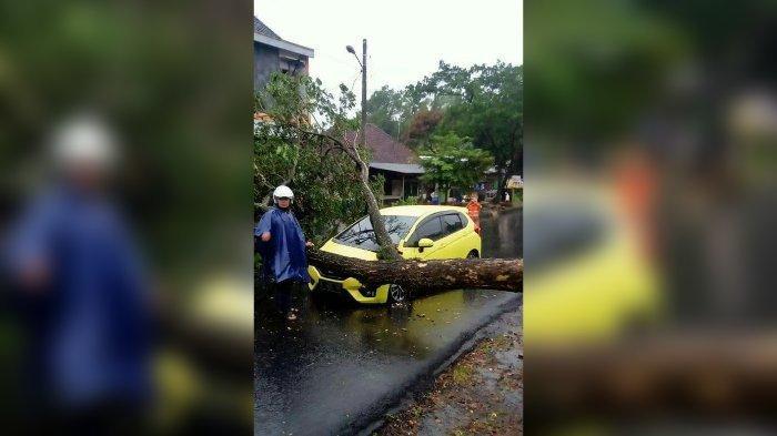 Honda Jazz Tertimpa Pohon Tumbang di Ciamis Sore Tadi, Perempuan Muda yang Kemudikan Mobil Panik