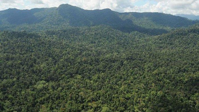 Tiga Warga Pamit Pergi Berburu di Hutan Parakanmuncang, Dua Orang Kembali, Satu Hilang, Sudah 6 Hari