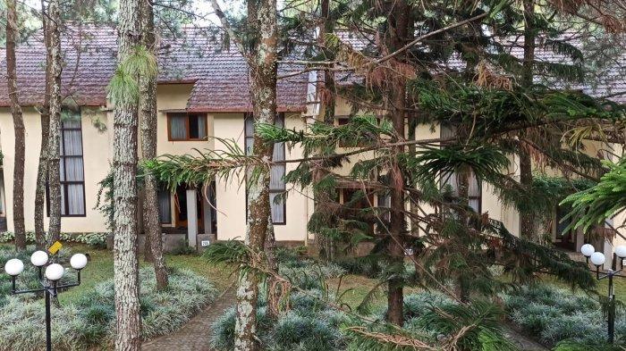 Hutan pinus di halaman Puri Setiabudhi Residence Hotel.