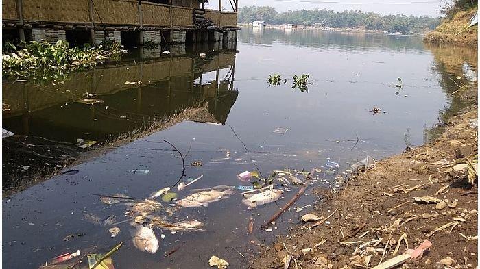 Ribuan Ekor Ikan Mati di Waduk Jatiluhur, Gara-gara Cuaca Mendung Terus, Mayoritas Ikan Mas