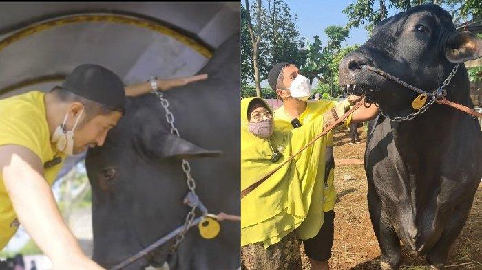 Detik-detik Sapi Grandong Dikurbankan, Momen Sedih Irfan Hakim Ikhlaskan Sapi Kurbannya yang Viral