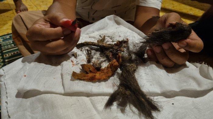 HEBOH Penemuan Jenglot di Area Makam, Setelah Dibedah Ternyata Tulangnya dari Tulang Kambing