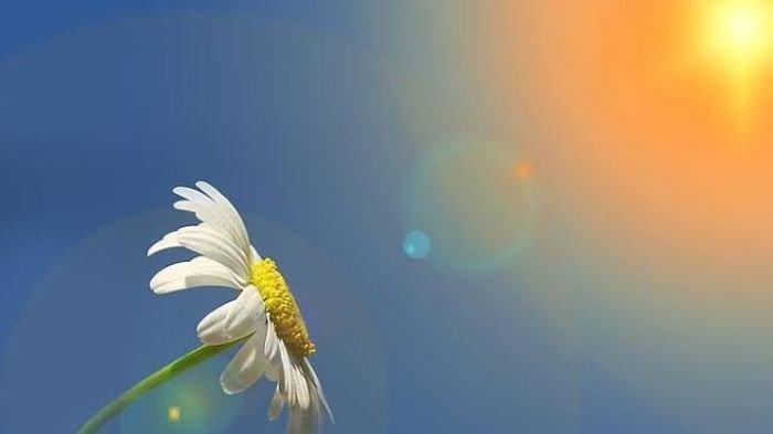 Kata-kata Bijak Selamat Pagi Penuh Makna, Kata-kata Semangat untuk Memulai Beraktivitas
