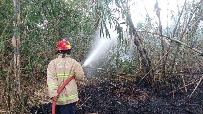 Kebun Bambu 1 Hektare di Wanayasa Purwakarta Terbakar, Danru Sebut Api Meluas Sangat Cepat