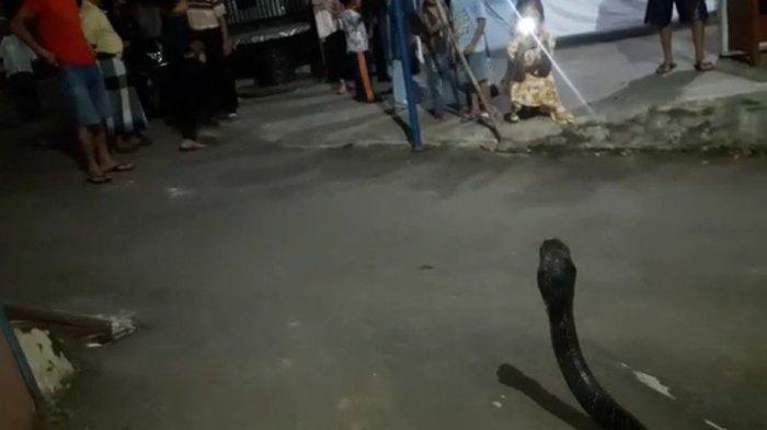 Jelang Berbuka Puasa Ramadhan, <a href='https://manado.tribunnews.com/tag/king-kobra' title='KingKobra'>KingKobra</a> Masuk ke Rumah Warga di Kuningan, Pawang Bergerak Cepat