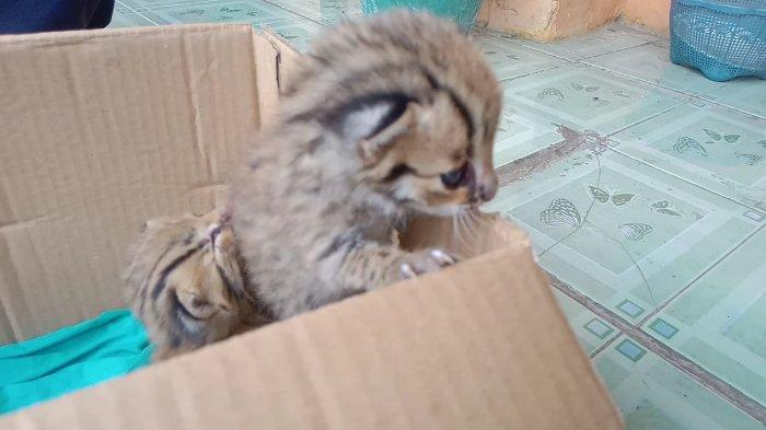 Sebelum Gempa Terjadi, Begini Perilaku yang Kerap Ditunjukkan oleh Kucing