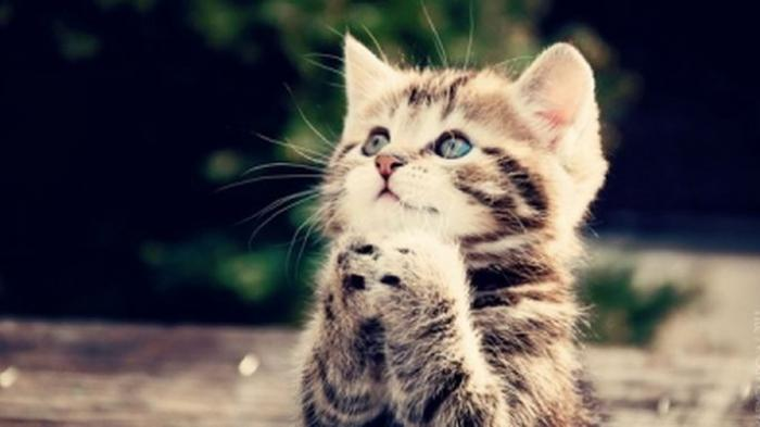 Inilah Penjelasannya Mengapa Rasulullah Sangat Menyayangi Kucing Tribun Jabar