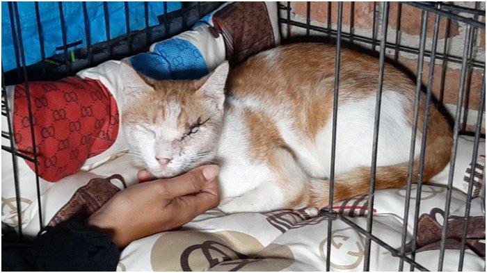Sempat Tak Mau Makan, Kucing di Cirebon yang Matanya Ditembak Pakai Senapan Angin Itu Membaik