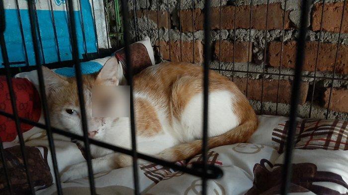 BREAKING NEWS Diduga Tembak Mata Kucing Pakai Senapan Angin, Pria di Cirebon Diadukan ke Polisi