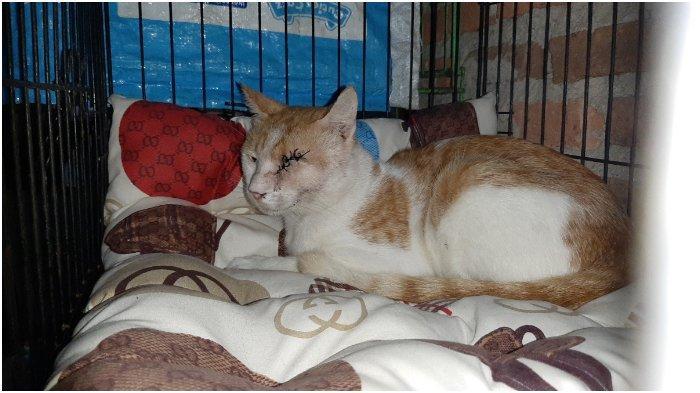 Kronologi Pria di Cirebon Tembak Mata Kucing, Diduga Kesal Hewan Ternaknya Dimakan