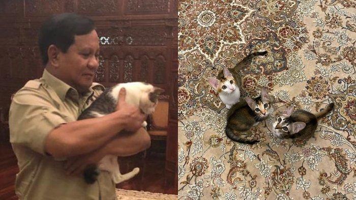 Ini Kucing-kucing Menhan Prabowo yang Baru, Dikenalkan Setelah Bobby Si Kucing Nakal Tenar di IG
