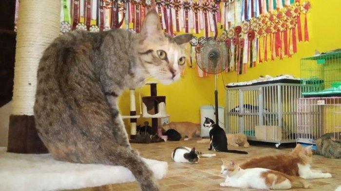 Ini Alasan Kucing Gemar Tidur Berjam-jam Lamanya