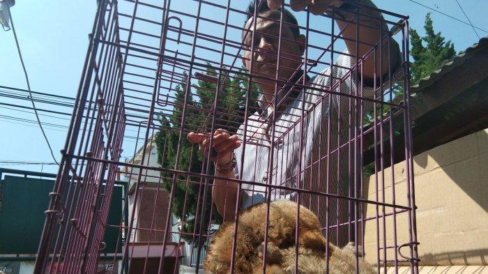 Induk & Anak Kukang Hasil Tangkapan Diserahkan ke BKSDA, Warga Tak Tahu Kukang Hewan yang Dilindungi