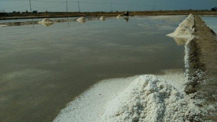 Petani Mengeluh Harga Garam Terjun Bebas, Diduga Tengkulak jadi Biang Keladinya