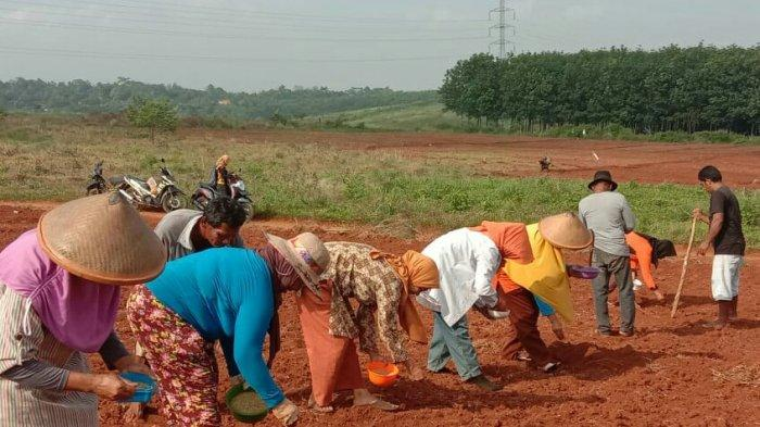 Lahan pertanian di Desa Jalupang Kecamatan Kalijati Kabupaten Subang