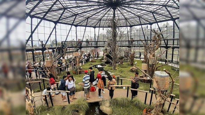 Ribuan Wisatawan dari Berbagai Daerah Ramai Nikmati Suasana di Lembang Park and Zoo