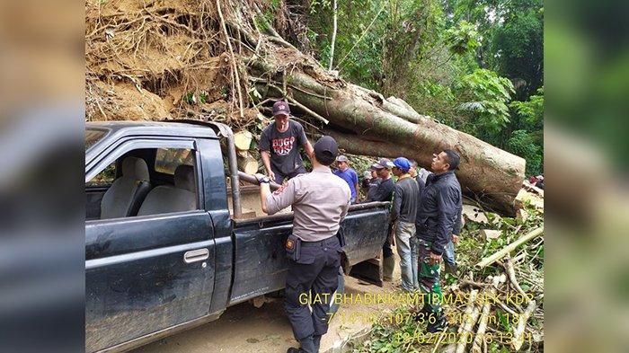 Longsoran Setebal 15 Meter Tutup Akses Utama Jalan Kadupandak Cianjur, Pohon Besar Melintang